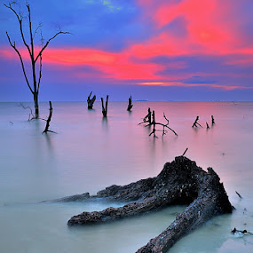 My life by Azri Suratmin - Landscapes Sunsets & Sunrises ( pantai klanang, wood, sunset, azri, pink, malaysia, seascape, azrisuratmin )