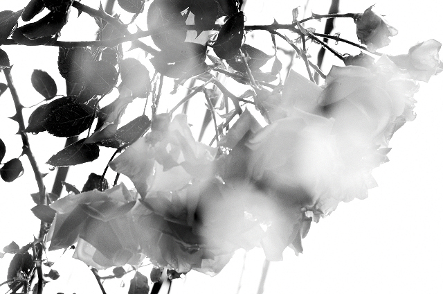 Shinjuku Mad - Rain like whisper, corrodes silence 06
