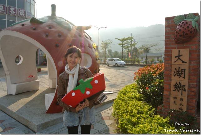大湖草莓 (13)