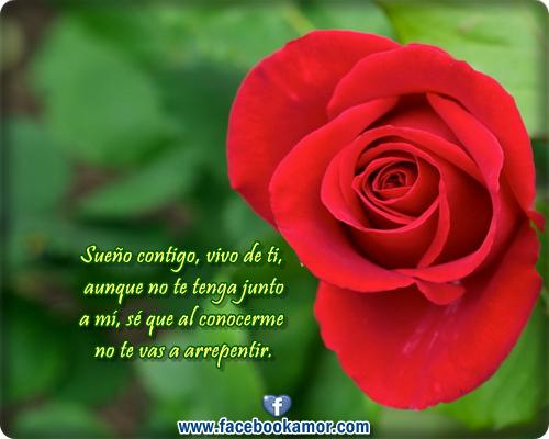 Imágenes de rosas rojas con frases de amor Todo en  - Imagenes De Rosas Rojas Con Frases