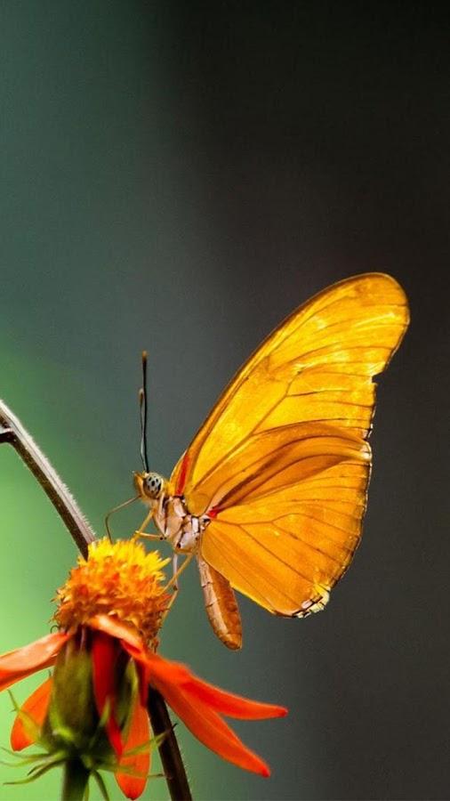 Schmetterlinge Live Wallpaper 🎀 Hintergrundbilder – Screenshot