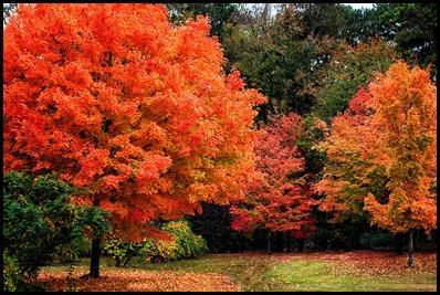 fall GA