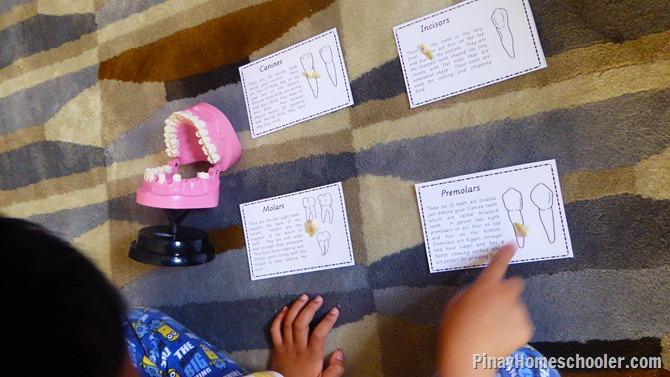 Dental Unit for Kids Definition Cards