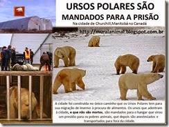 urso_polar_prisao