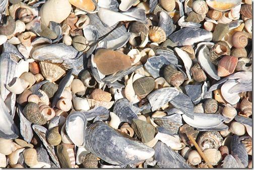 20-shells