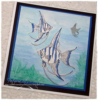 Angelfish 2015  f
