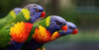 Burung Terpopuler di Indonesia