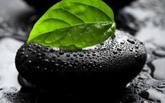 blackstone greenleave