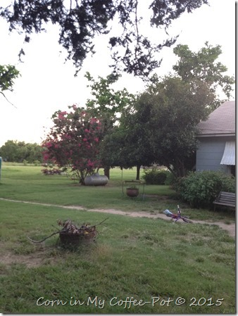 yard pictures mid july 2015 083