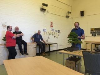 bonsai preperation for bonsai exhibition