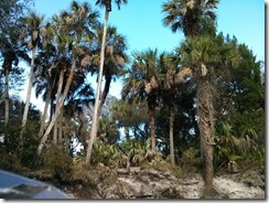 Palms by the river