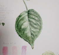 Rose leaf study in watercolour
