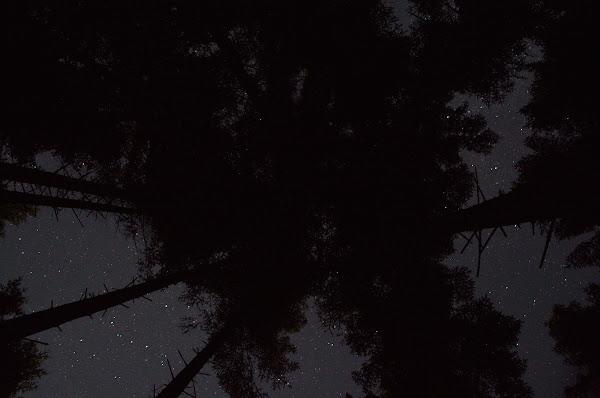 ночь небо звезды карпаты сосны