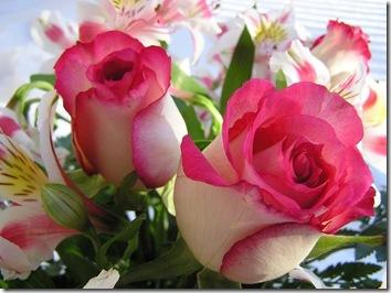 Rosas jóvenes