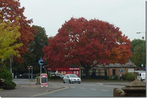 4 m drayton fab tree