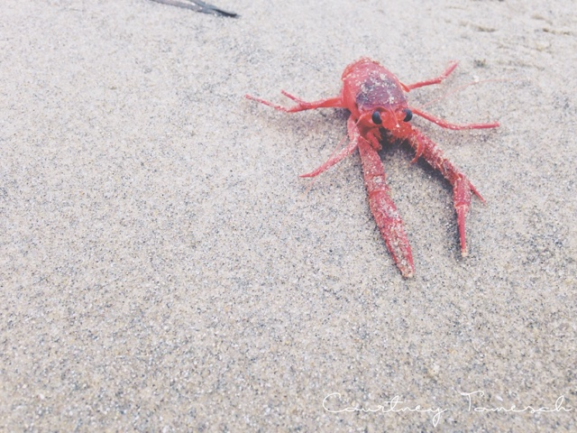 Tuna Crabs