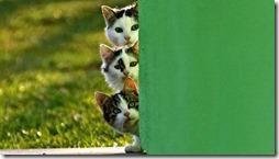 gatos divertidos buscoimagenes (5)