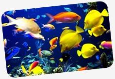http://lh3.googleusercontent.com/-om_VzOrj3bE/VYxZtfjgMOI/AAAAAAAAIHQ/ptrtQLaVWdQ/fish2_thumb%25255B5%25255D.jpg?imgmax=800