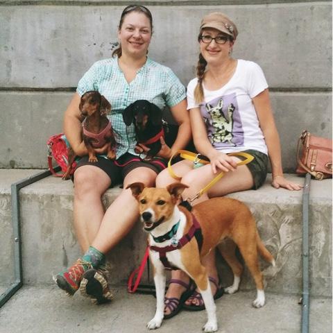 potcake and dachshund friends in Denver