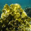 Buck Island Reef - IMGP1123.JPG