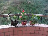 balcony at Ankeng apartment