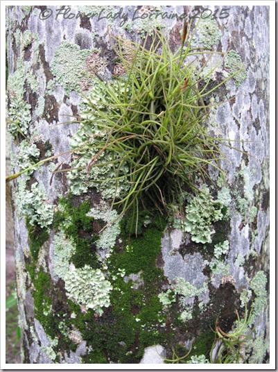 09-17-lichen-up-close3
