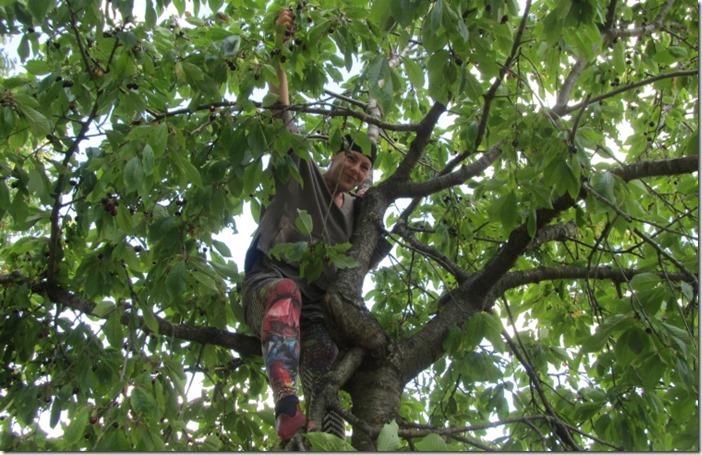 Auf dem Kirschbaum