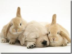 Cane-coniglio