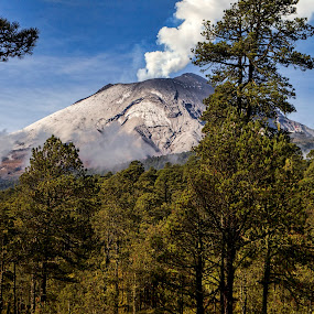 Smoking volcano by Cristobal Garciaferro Rubio - Landscapes Forests ( pine fores, volcano, popo, snow, smowy volcano, popocatepetl, forest, smoking volcano )