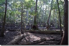 Hobbit trees-2