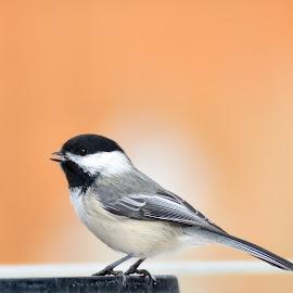 by Jodi Iverson - Animals Birds