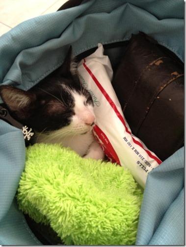 gatos sitios para esconderse (4)