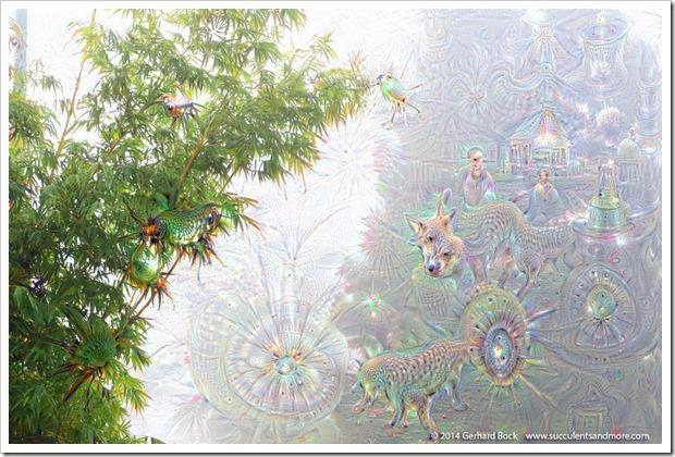 weird2015-07-18_23-06-12.749057141223_fog_004