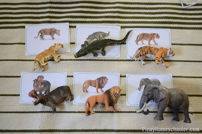zoo animal cards
