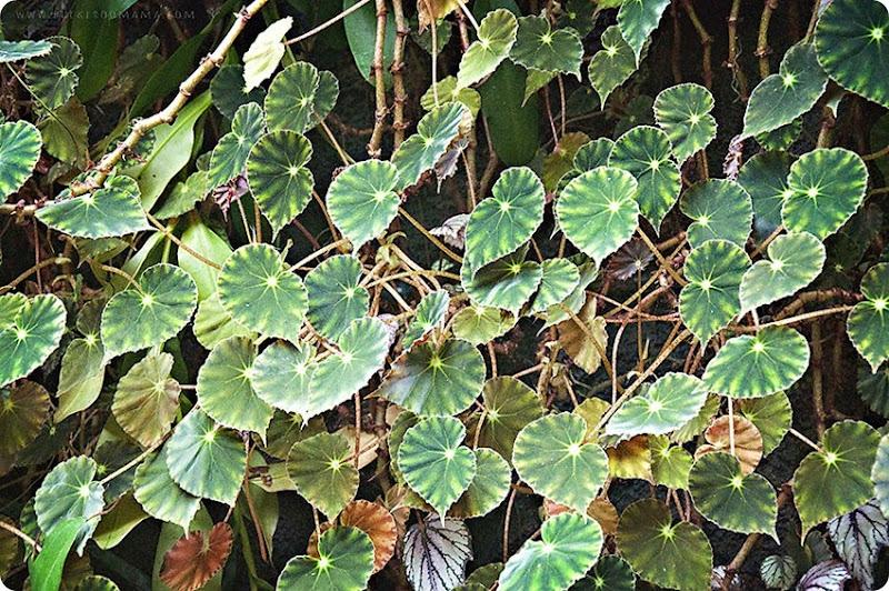 Twinkle-leaves-(1)