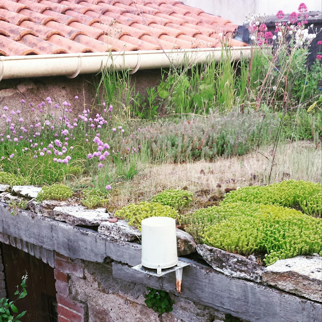 Create your own green roof garden travel gourmande for Build your own cupola