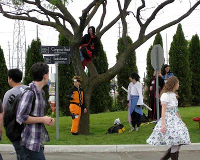 The Ninja Tree