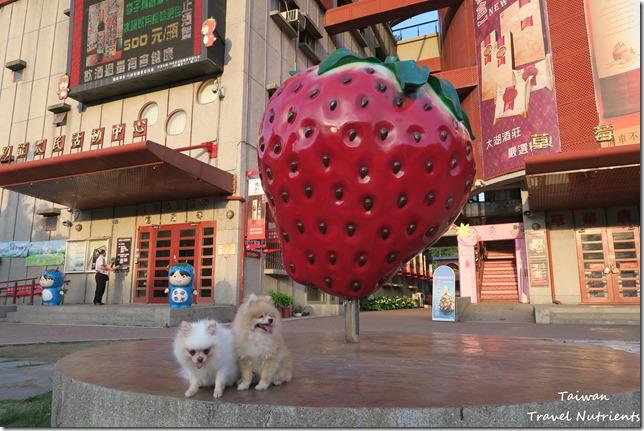 大湖草莓 (31)