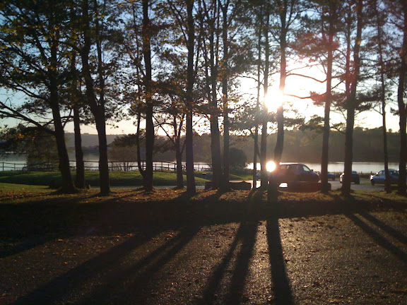 Sunlight through Tall Pines at Chew Valley Lake