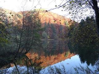 Lac artificiel à l'Arboretum du Vallon de l'Aubonne