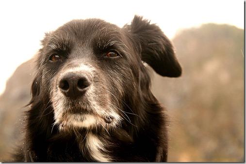 i tumori nel cane anziano 2