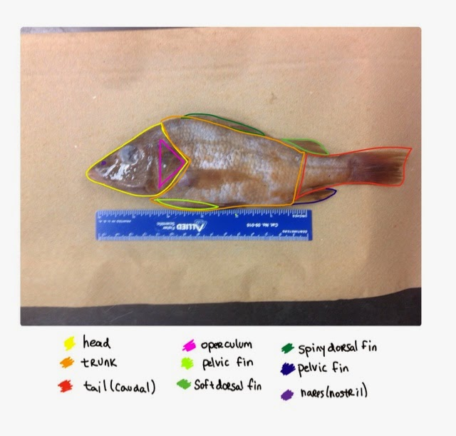 The Four Isomers: Perch Anatomy