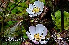Glória Ishizaka - Hortus Botanicus Leiden - 26
