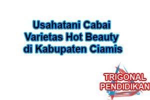 Usahatani Cabai Varietas Hot Beauty di Kabupaten Ciamis