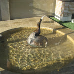 The Peabody ducks in the Duck palace on the Peabody Hotel roof in Memphis TN 07202012-01