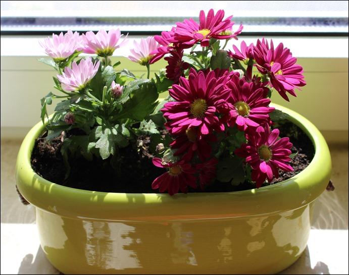 00 Blumen Fensterbank