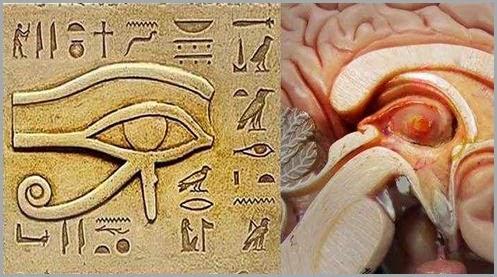 pineal-olho-de-horus