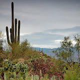 To Saguaro National Park
