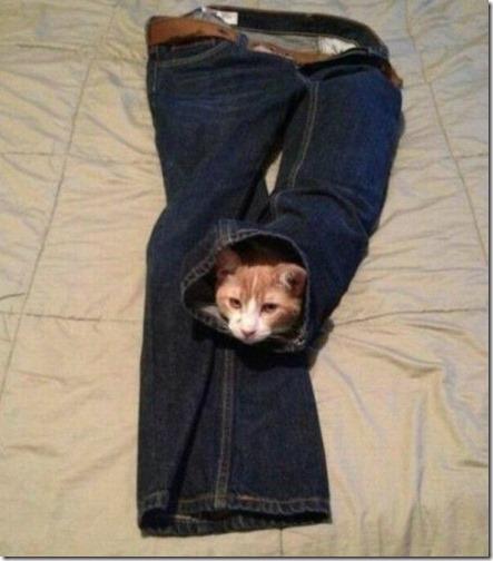 gatos sitios para esconderse (19)