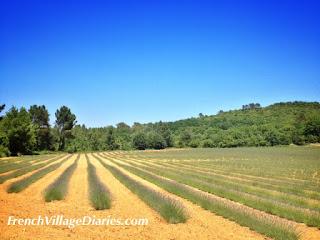 French Village Diaries Mini Cooper Road trip Provence France lavender Cevennes